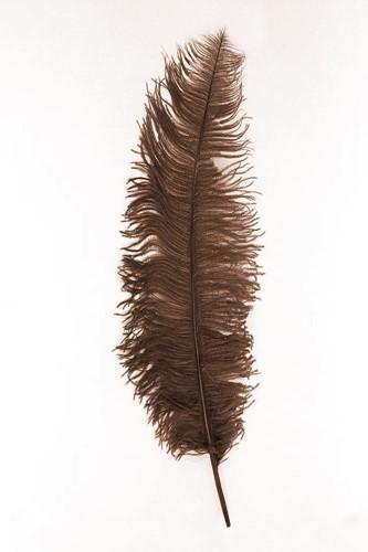 Struisvogelveer Geel ca. 60cm