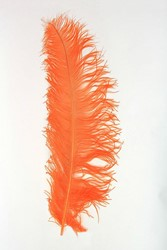 Struisvogelveer Oranje ca. 60cm