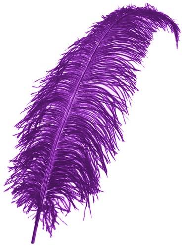 Struisvogelveren 50-60cm Paars
