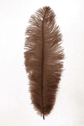 Struisvogelveer Groen ca. 30cm
