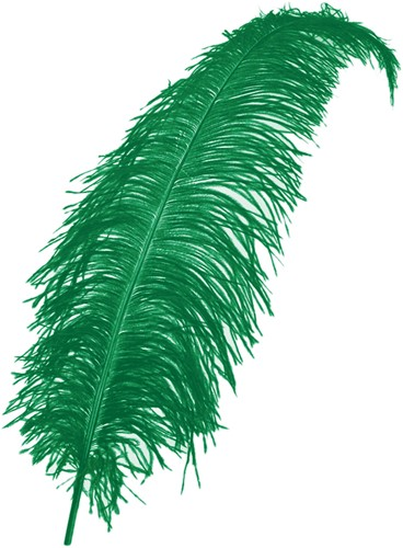 Struisvogelveren ca. 60cm Groen