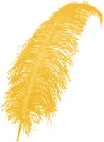 Struisvogelveren ca. 60cm Geel