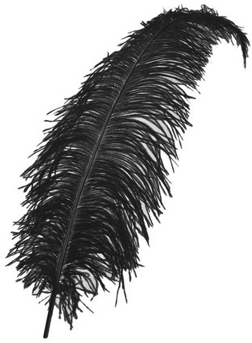 Struisvogelveren ca. 60cm Zwart