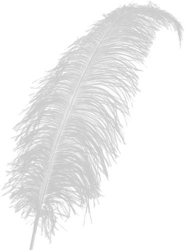 Struisvogelveren ca. 60cm Wit